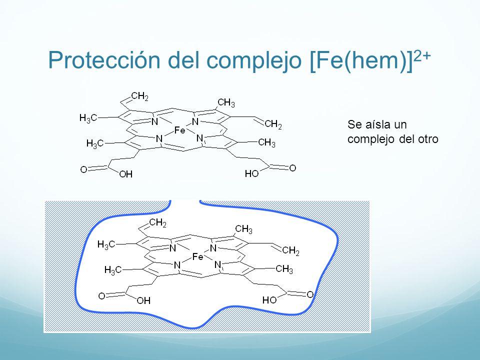 Protección del complejo [Fe(hem)]2+